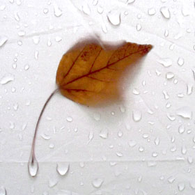 Rain___Leaf_Texture_in_Tent